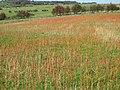 Field near Egton - geograph.org.uk - 292086.jpg