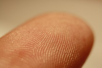 Fingerprint - The friction ridges on a finger