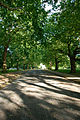 Finsbury Park Tree Avenue.jpg