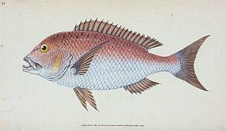 Edward Donovan - Image: Fish Edward Donovan