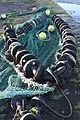 Fishing nets, North Dock, Ardglass, November 2010 (03).JPG