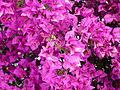 Fleurs sur l'esplanade du front de mer, Royan.JPG
