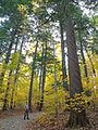 Flickr - Nicholas T - Indian Point Park (2).jpg