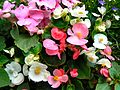 Flickr - ronsaunders47 - SUMMER BLOOMS. 2.jpg