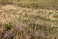 Flore dans le marais du Conseiller.jpg