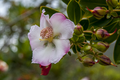 Flores da região de vila de igatu 1.png