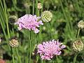 Flores en el Jardín Botánico de Viña del Mar 15.JPG