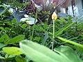 Flower 192229.jpg