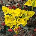 Flower 3379.jpg