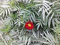 Flower in my village.jpg