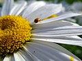 Flowers of Iran گلهای ایران 29.jpg