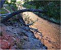 Flowing Copper, Zion NP, Angel's Landing Trail, 5-1-14f (14381963351).jpg