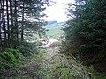 Footpath at Bryn Bach in the Hafren Forest - geograph.org.uk - 1113074.jpg