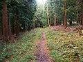 Footpath in Doles Wood - geograph.org.uk - 1069815.jpg