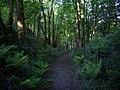 Footpath through Otter Wood - geograph.org.uk - 1415468.jpg