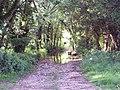Ford through River Allen near Damerham - geograph.org.uk - 448169.jpg