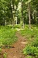 Forest Park, Springfield, MA 01108, USA - panoramio (72).jpg