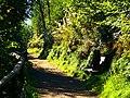 Forest Walk - panoramio (12).jpg