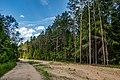 Forest in Minsk (June 2020) 10.jpg