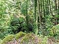 Forest near Gorges du Pont du Diable 03.jpg