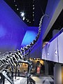Fosil di Singapura.jpg