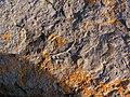 Fossils - panoramio.jpg