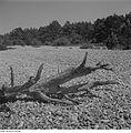 Fotothek df ps 0001442 Landschaften ^ Insellandschaften.jpg