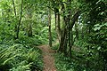 Fowey, in Covington Woods - geograph.org.uk - 1403070.jpg