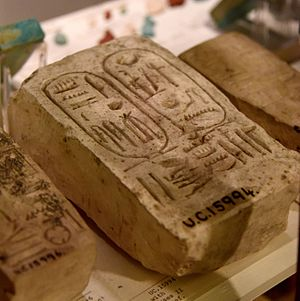 Nebwenenef - Fragment of a limestone block showing the cartouche of Ramesses II and the name of Nebwenenef. 19th Dynasty. From Kurna (Qurna), Thebes, Egypt. The Petrie Museum of Egyptian Archaeology, London
