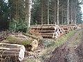 Freshly felled logs, in Charles Wood - geograph.org.uk - 1116172.jpg