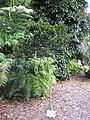 Gardenology.org-IMG 1380 rbgs10dec.jpg