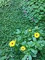 Gardens in Baghdad 45.jpg