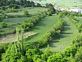 Gardun, Trilj, Hrvatska - polje (1).jpg
