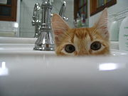 Gatos são curiosos por natureza