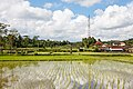 Gianyar-Regency Bali Indonesia Shrine-on-a-paddy-02.jpg