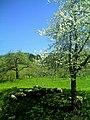 Glottertal - panoramio (42).jpg