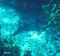 Glover's Reef 2-14 (33142037332).jpg