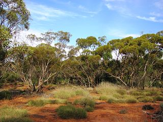Riverland Biosphere Reserve Protected area in South Australia