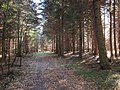 Gmina Narol, Poland - panoramio (17).jpg