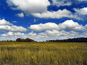 Numerical weather prediction - Field of cumulus clouds, which are parameterized since they are too small to be explicitly included within numerical weather prediction