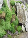 Grass&moss1 (8045686418).jpg