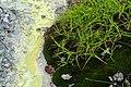 Grass and sulphur - Mount Osore - Mutsu, Aomori - DSC00553.jpg