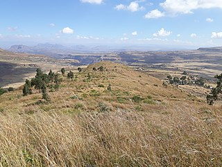 Grassland areas where the vegetation is dominated by grasses (Poaceae)