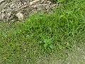 Grassy Area.jpg