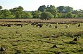 Grazing land by Larennie - geograph.org.uk - 182878.jpg