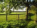 Green Footpath - geograph.org.uk - 70871.jpg