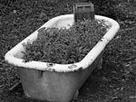 Growing Roots (28994300045).jpg
