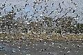 Gulls - Flickr - GregTheBusker.jpg