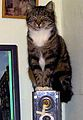 Guycat.jpg