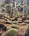Gwaii Haanas National Park (27482050431).jpg